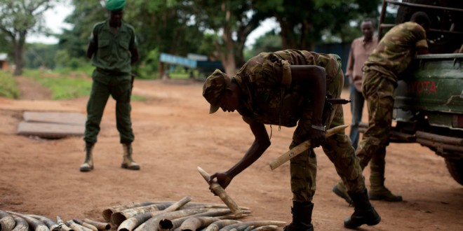 Bloody Ivory: Elephants and Instability in Central Africa
