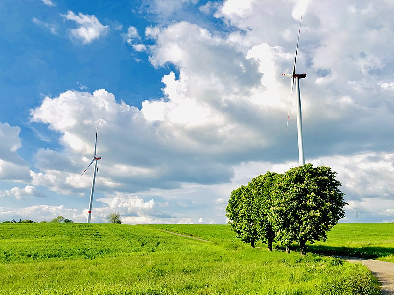 Hawaii: too Green to Function?