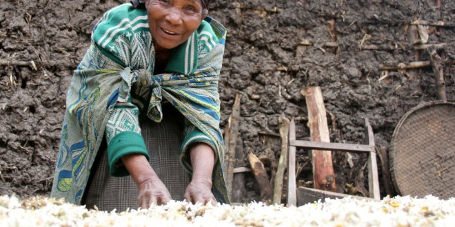 The Power of a Flower: Recovering Rwanda's Agriculture