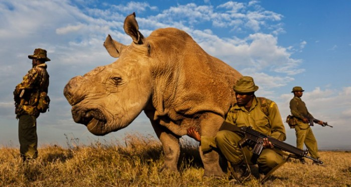 The Beastly Component of Conflict: How War Endangers Species