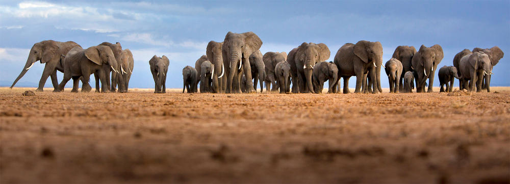 The Politics of Ivory: Changing the Paradigm of 'Western Conservation'