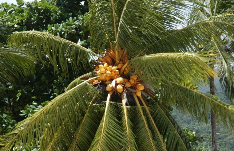 The non-state side of IR: Can multinational corporations turn palm oil sustainable?