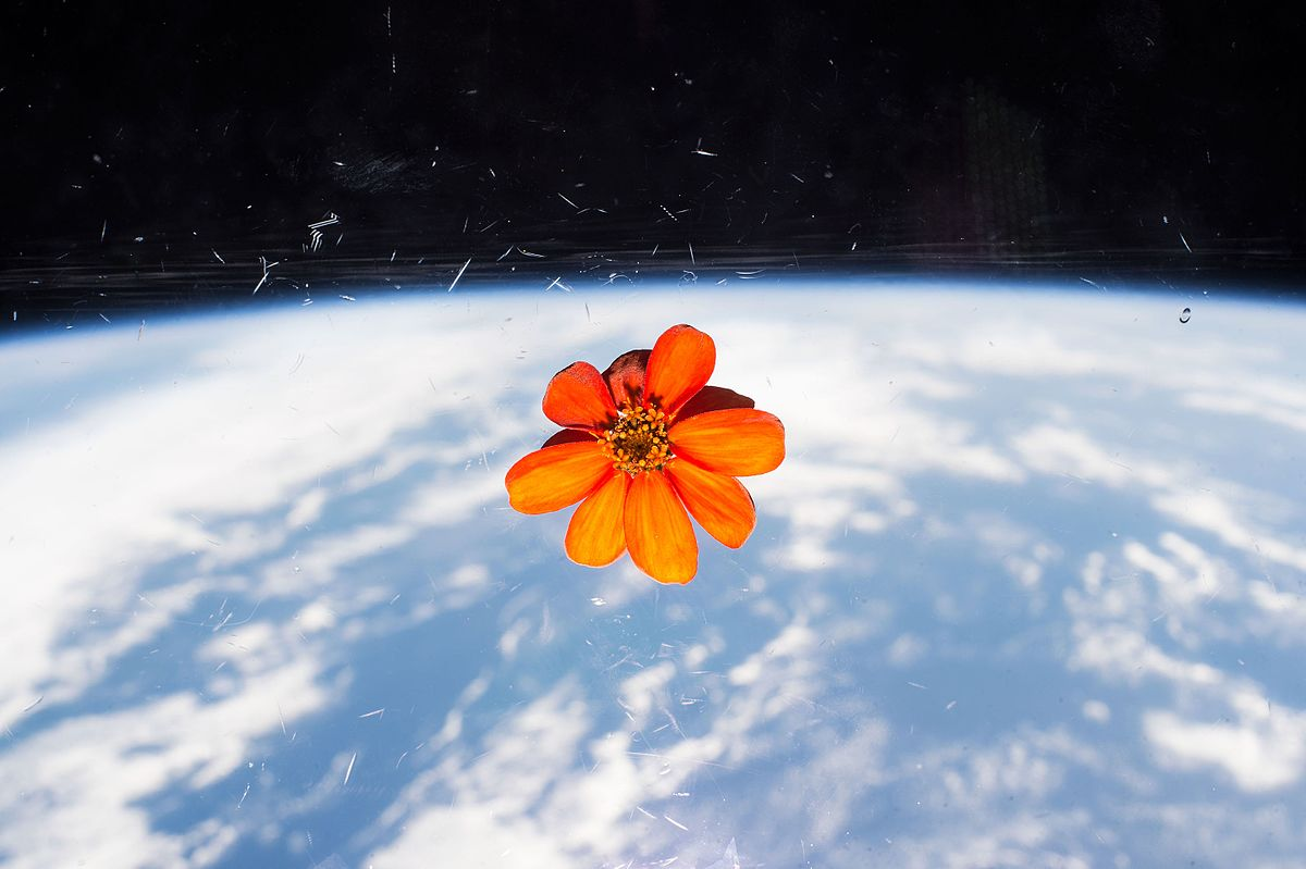 New Life on… the International Space Station?!